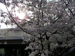 秋葉原06-0328-05