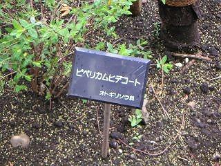 秋葉原06-0412-15