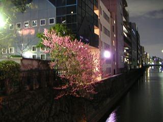 秋葉原07-0310-03