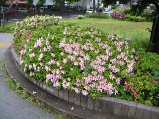 秋葉原13-0421-03
